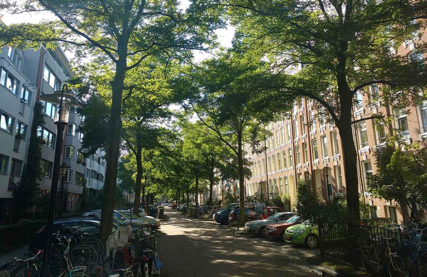 Bomenrij in eerste deel Commelinstraat